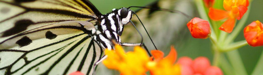 Vlinder op bloem in Blijdorp