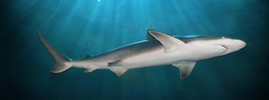zeeroofdier haaientunnel haai  zeeroofdier zeeroofdieren